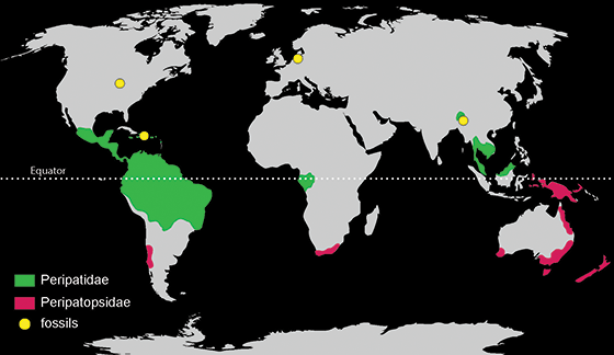 Onychophoran distribution